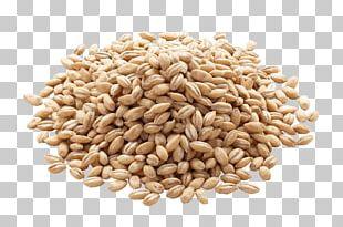 Barley Organic Food Cereal Whole Grain Rice PNG