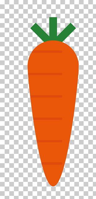 Carrot Cartoon Radish PNG