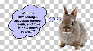 Netherland Dwarf Rabbit Holland Lop Pet PNG