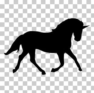 Arabian Horse Tennessee Walking Horse Morgan Horse Silhouette PNG