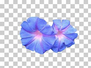 Flower Sacred Geometry Petal Drawing PNG