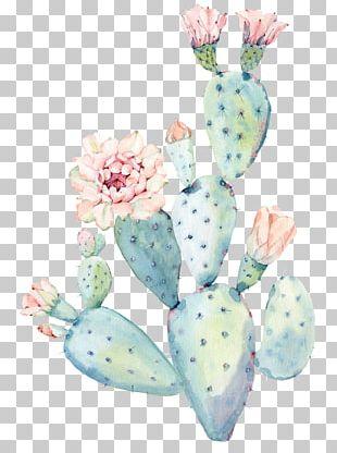 Cactaceae Watercolor Painting Saguaro PNG