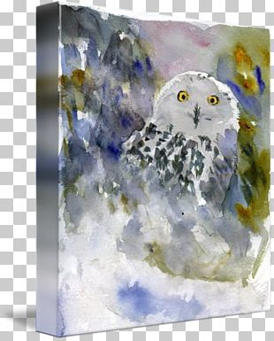 Owl Watercolor Painting Gallery Wrap Canvas PNG
