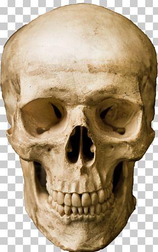 Human Skull Stock Photography Robot PNG