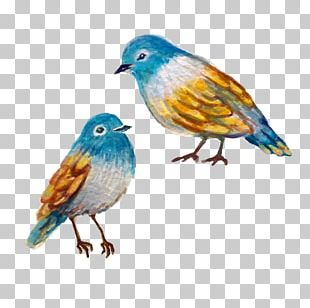 Bird Finch Watercolor Painting PNG