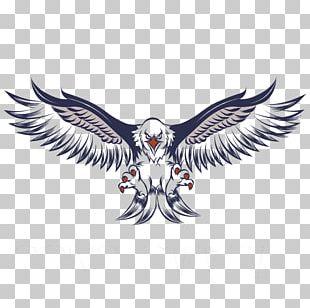 Bald Eagle White-tailed Eagle PNG