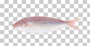 Northern Red Snapper Fish Products Cod Oily Fish Pagrus Major PNG
