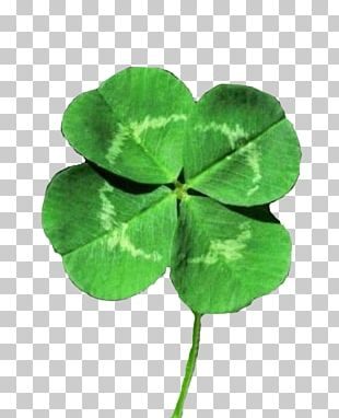 White Clover Four-leaf Clover Luck Shamrock Saint Patrick's Day PNG