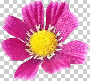 Daisy Family Cut Flowers Annual Plant Chrysanthemum PNG