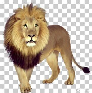 East African Lion Tiger Lionhead Rabbit Shih Tzu Felidae PNG