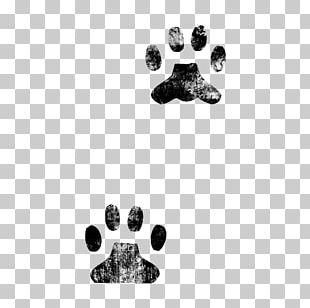 Wildcat Kitten Paw PNG