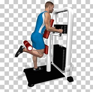 Leg Curl Leg Extension Hamstring Quadriceps Femoris Muscle Biceps Femoris Muscle PNG