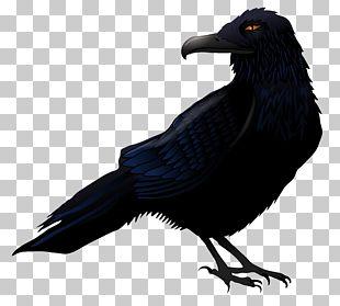 Common Raven Bird PNG