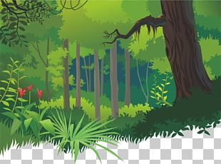 Cartoon Tropical Forests PNG