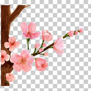 Cherry Blossom Watercolor Painting Spring Peach Blossom PNG