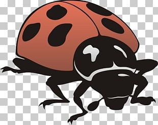 Insect General Entomology Ladybird PNG