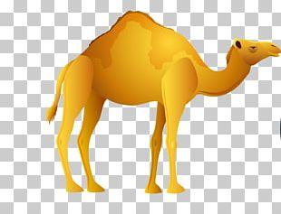 Camel Egypt PNG
