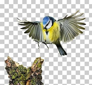 Flying Bird PNG Images, Flying Bird Clipart Free Download
