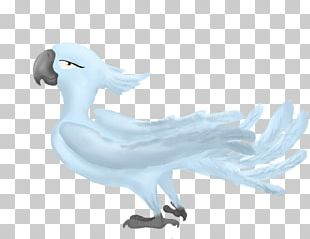 Water Bird Goose Feather Anatidae PNG