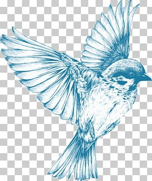 Bird Drawing For Girls Sketch PNG