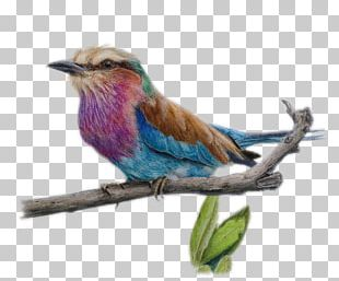 Drawing Colored Pencil Watercolor Painting Sketch PNG