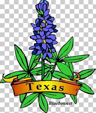 Texas Bluebonnet Texas Bluebonnet Drawing PNG