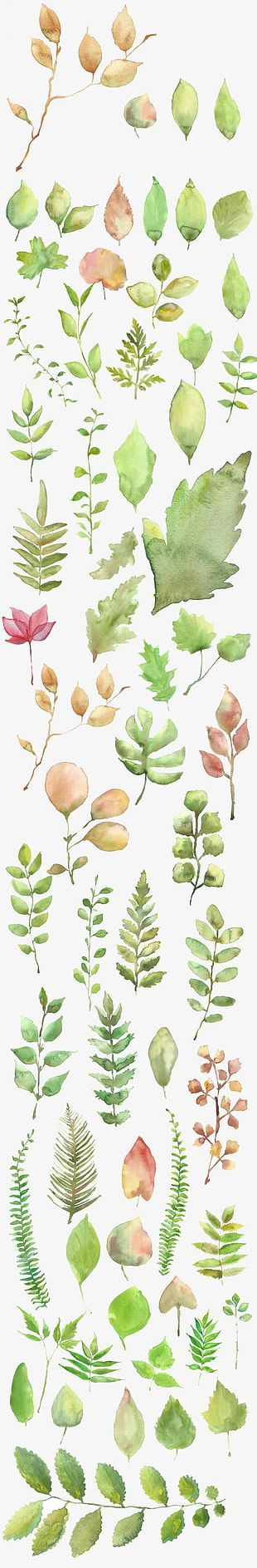 Watercolor Leaves Shading Material PNG
