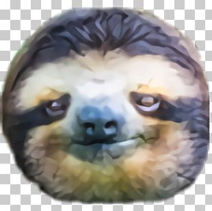 Twitch Emote Streaming Media Video Game Counter-Strike: Global Offensive PNG