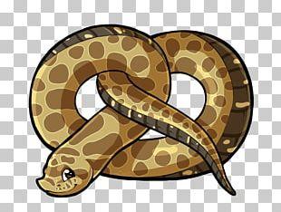 Boa Constrictor Hognose Snake Rattlesnake Vipers PNG