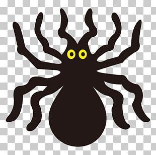Spider Funny Halloween Pumpkins PNG