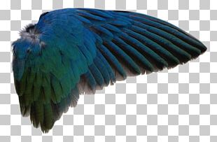 Bird Wing Feather PNG