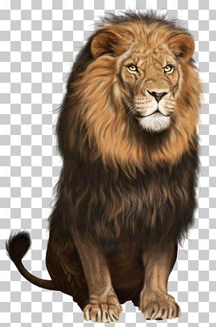 Lion Cat PNG