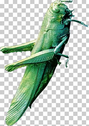 Bird Insect Parrot Illustration PNG