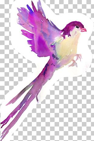 Bird Wren Watercolor Painting Drawing PNG