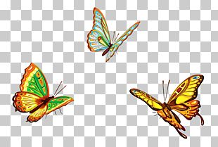 Butterfly Euclidean Graphic Design Illustration PNG