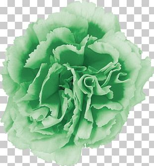 Cut Flowers Carnation Cabbage Rose Pink Flowers PNG