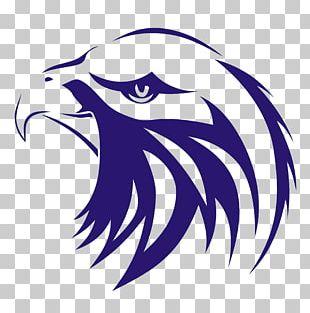 Indonesia Bald Eagle Bird Elang PNG