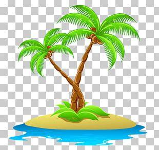 Coconut Arecaceae PNG