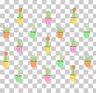 Cactaceae Drawing Succulent Plant Botanical Illustration PNG