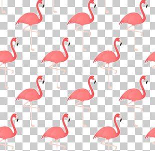 Flamingo Bird Drawing PNG