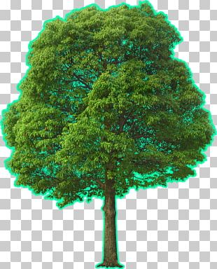 Tree Landscape Architecture PNG