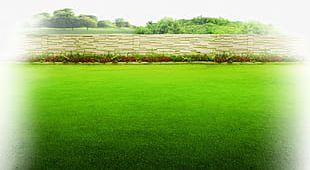 Garden Green Grass Background PNG
