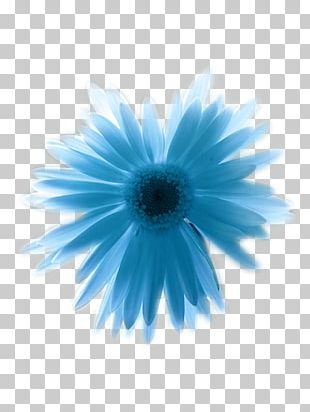 Blue Primary Color Paper Flower PNG