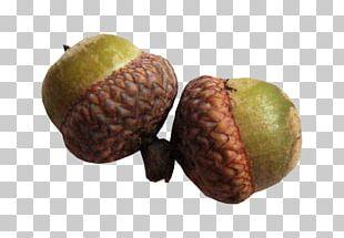 Walnut Acorn Oak Осенние размышления Photography PNG