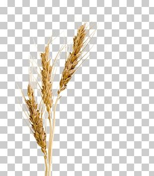 Barley Malt Syrup Barley Malt Syrup Wheat Barley Malt Extract PNG