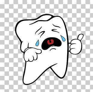 Dentistry Human Tooth PNG