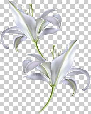 Diagram Madonna Lily Zeigermodell PNG