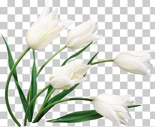 Flower Bouquet Desktop Cut Flowers White PNG
