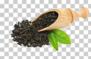Green Tea Oolong Boston Tea Party Tea Culture PNG