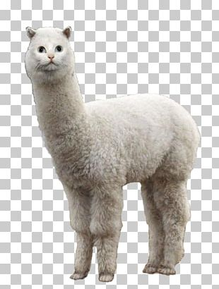 Llama Alpaca Cat Animal PNG